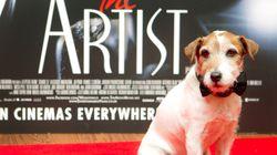 Et le meilleur interprète canin est... Uggie de «The