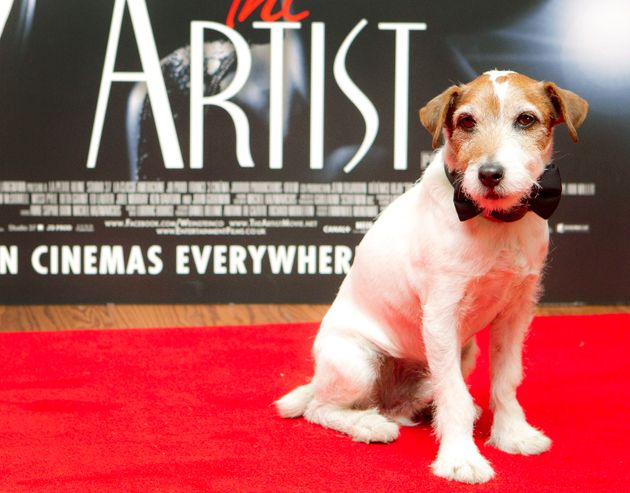 Uggie le chien, qui a joué dans le film The Artist, assiste à une projection spéciale...