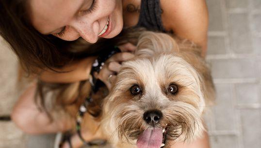 Adoção de animais domésticos é opção em meio ao isolamento