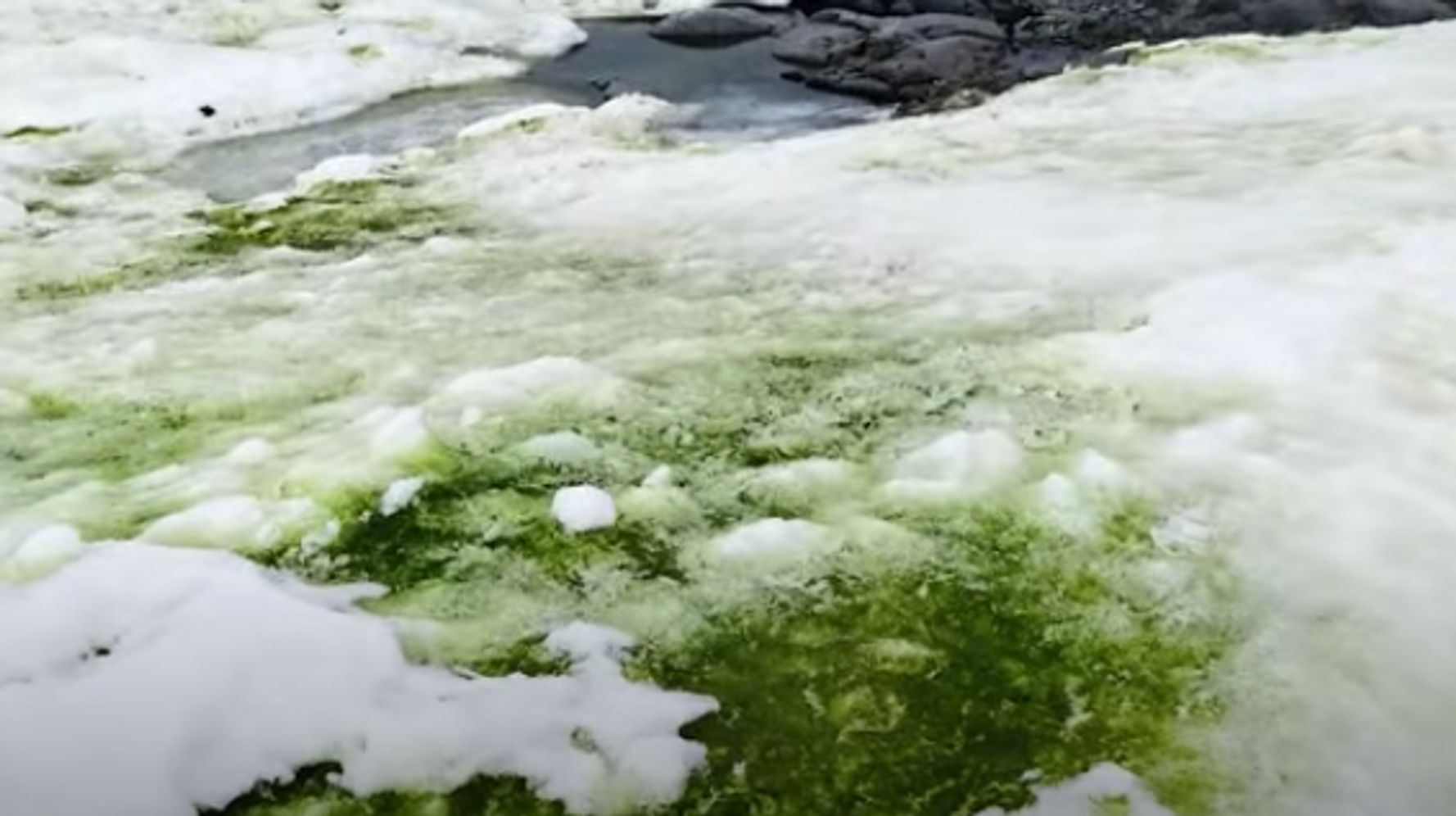 Climate Change Could Mean More Of Antarctica Turning Green With Algae - HuffPost