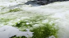 Climate Change Could Mean More Of Antarctica Turning Green With Algae