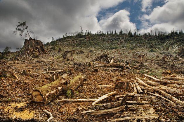 Non sottovalutiamo il dramma della deforestazione aggravato