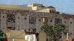 Ινδία: Τρομακτικές σκηνές από την επιδρομή εκατομμυρίων