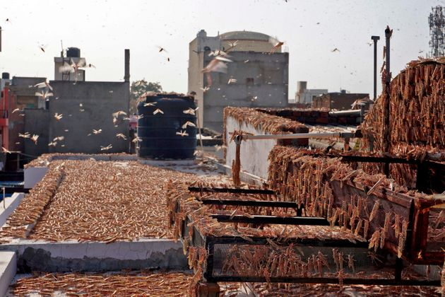 Locusts are seen atop a residential building in