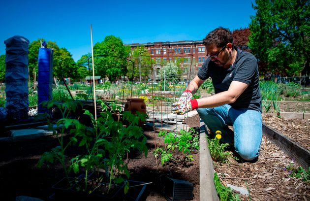 À Montréal, plusieurs jardins communautaires sont de nouveau accessibles pour les