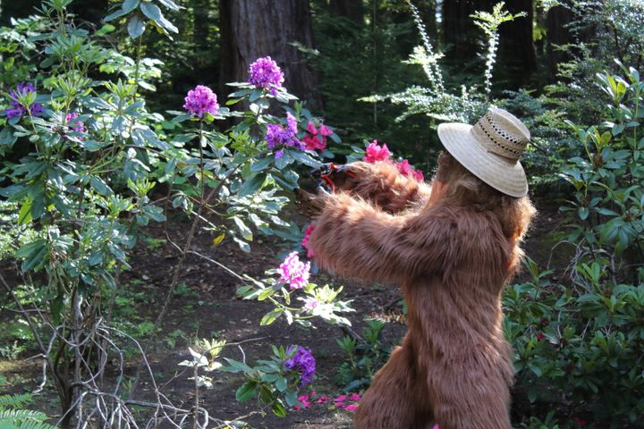 Bigfoot trims flower bushes around a home with a list price near $1 million.