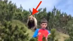 Boy, 12, Remains Totally Calm Despite The Massive Bear Creeping Up Behind