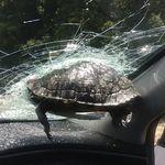 운전을 하고 있는데, 앞유리를 향해 거북이가
