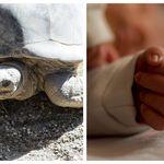Neonata muore dopo aver bevuto sangue di tartaruga: per i genitori era
