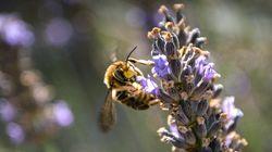 Biodiversidad, más que palabras