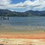 Ακτές στη Νέα Ζηλανδία βάφτηκαν κόκκινες από εκατομμύρια νεκρούς αστακούς που έκαναν ένα μοιραίο