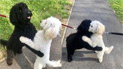 산책 중 마주친 강아지들이 격하게 서로를 끌어안은 이유