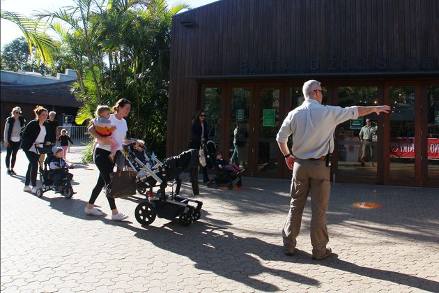 A park staff member directs guests on arrival during the re-opening of Taronga Zoo on June 01, 2020 in...