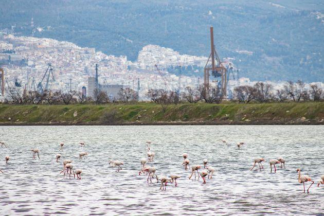 Θεσσαλονίκη (Photo by Nicolas Economou/NurPhoto...