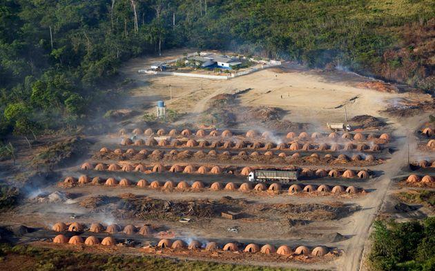 Η εξαφάνιση των τροπικών δασών- Κάθε έξι δευτερόλεπτα χάνεται έκταση ίση με γήπεδο