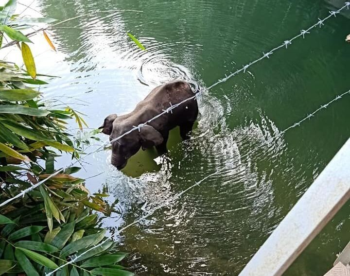 The death of an elephant in Kerala.
