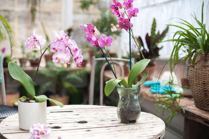Ορχιδέες σε γλάστρες και βάζο στον κήπο.