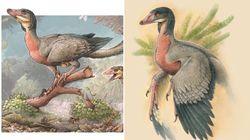 Les restes d'un nouveau petit dinosaure ailé découverts en