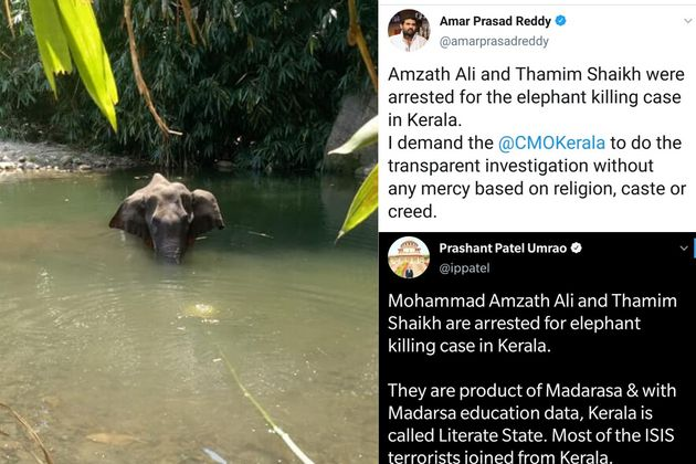 Kerala elephant's