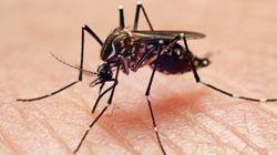 Trucos y remedios para no sufrir con los mosquitos este