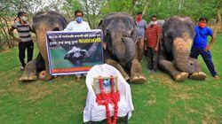 Chasse à l'homme en Inde après la mort d'une éléphante qui a mangé un ananas piégé de
