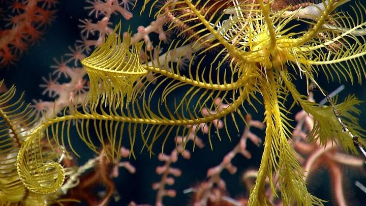 A glimpse at what the Northeast Canyons and Seamounts Marine National Monument is protecting.