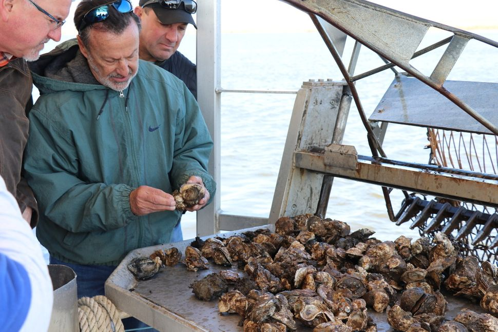 St, Bernard Parish oysterman Brad Robin, owner of Robin Seafood, checking oysters damaged by fresh water flooding off St Bern