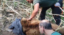 H σωτηρία του «Θεόφιλου»: Διάσωση αρκούδας από παράνομη παγίδα για