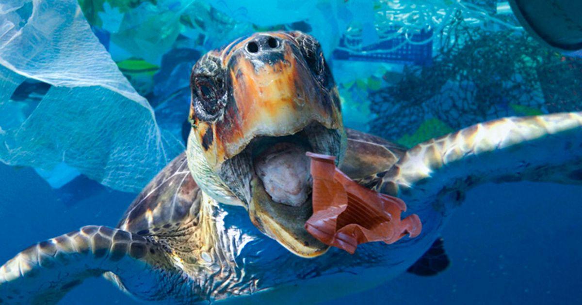 問題 海洋 プラスチック