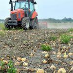 最高の出来栄えなのに...タマネギ180トン、畑で廃棄。新型コロナにより平均価格「過去にない下落率」