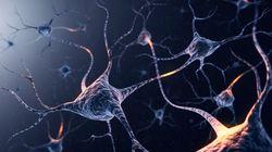Nuestras neuronas sufren atascos que pueden dañar el