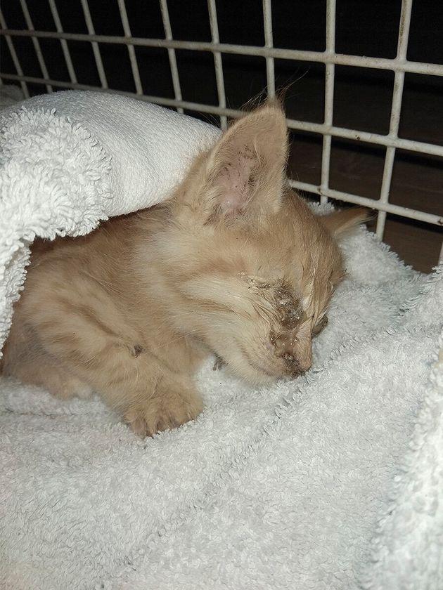 Καταγγελίες για δεκάδες εγκαταλελειμμένα ζώα στους Παξούς – Τι απαντά ο