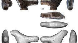 Des archéologues ont découvert la plus vieille oeuvre d'art