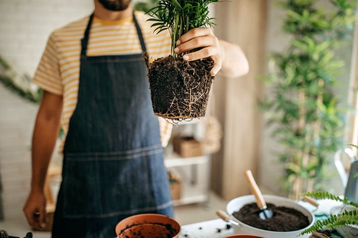 You shouldn't repot a plant right after you get it. Instead, give it a few days or weeks to acclimate to your home.