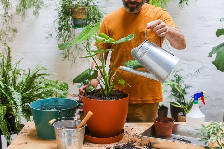 Typically, the problem isn't how much water you use to water a plant, but it's watering something too frequently.