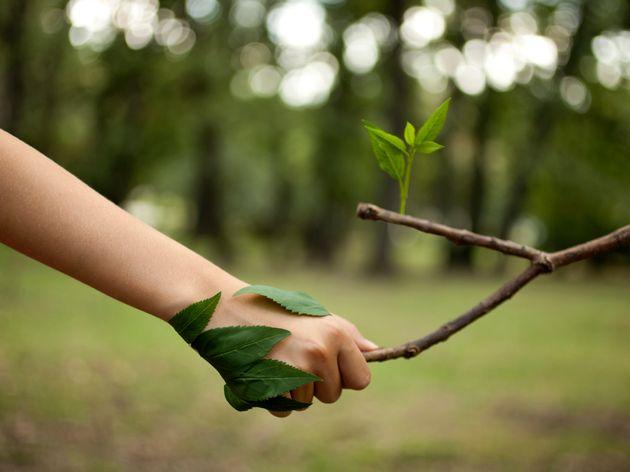 Stati generali e Piano Colao, cercasi Green New