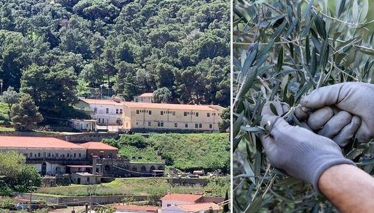 Nuova vita nell'isola carcere di Gorgona. Chiuso il mattatoio, ai detenuti la cura di animali e natura (di F.