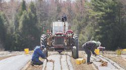 Mexico suspend l'envoi de 5000 travailleurs saisonniers à la suite de deux