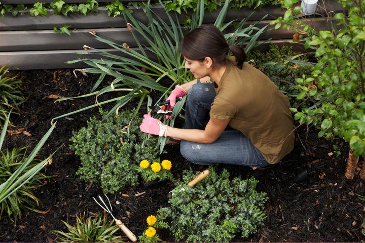 Εργαλεία κηπουρικής.