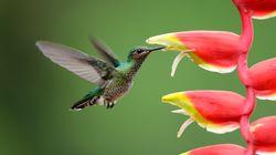 To πτηνό που μπορεί να δει χρώματα που είναι αόρατα για το ανθρώπινο
