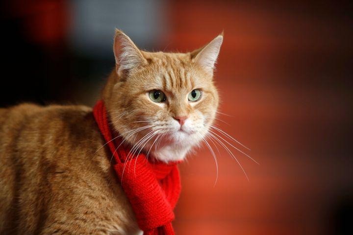 2016년 영화 '내 어깨 위 고양이, 밥'(A Street Cat Named Bob) 시사회에 참석한 밥