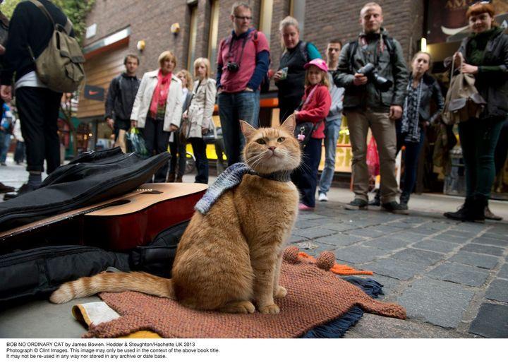 책 '내 어깨 위 고양이, 밥'에 실린 버스킹 시절 밥의 모습.