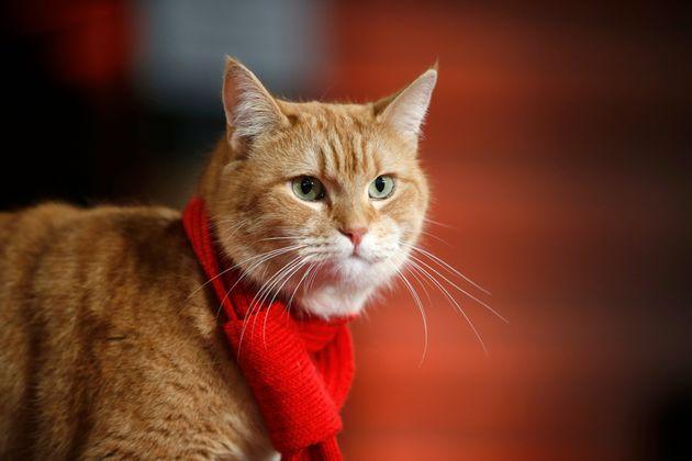 R.I.P. Μπομπ: Πέθανε ο γάτος που έκανε εκατομμυριούχο έναν άστεγο κι έγινε βιβλίο και
