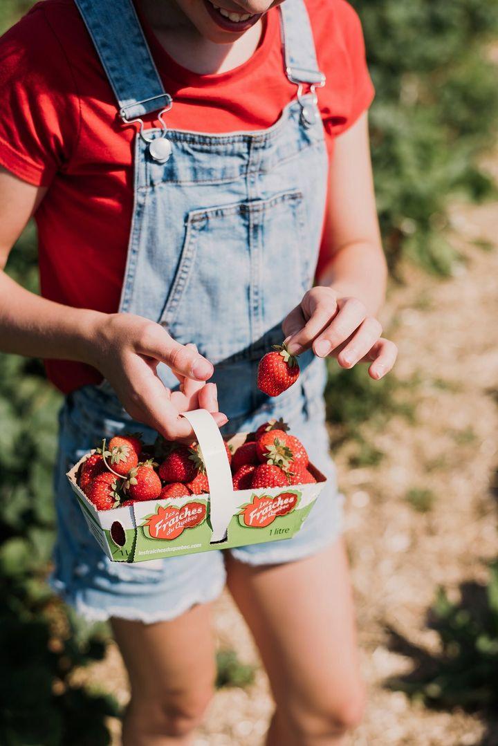 Les fraises du Québec sont disponibles du début du mois de juin aux premières gelées d'octobre.
