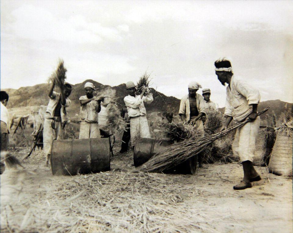 1951년 8월 22일 전쟁 중에도 농사를 지으며 일상을 지키는 사람들의 모습. 2018년 6월 22일