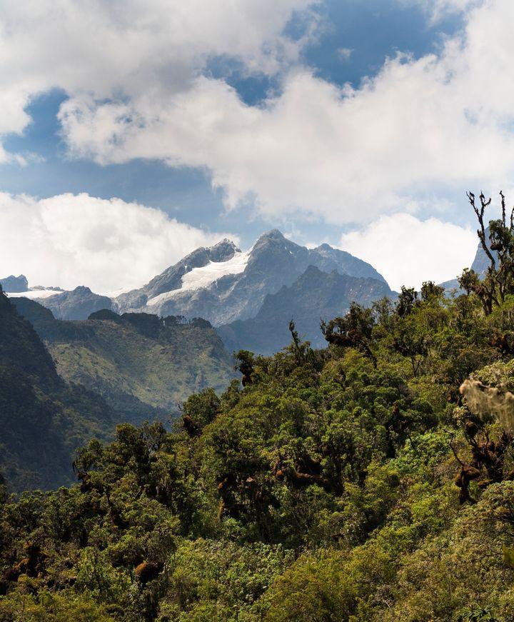 모부쿠 밸리아프리카에서 바라본 르웬조리 산지의 스탠리 산(5,109m)