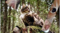 Σάμπι, η πιο διάσημη γάτα της Φινλανδίας στην πρώτη της