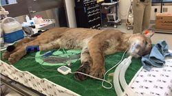 Τι κρύβεται πίσω από τον θάνατο τριών καγκουρό στον ζωολογικό κήπο του Σαν