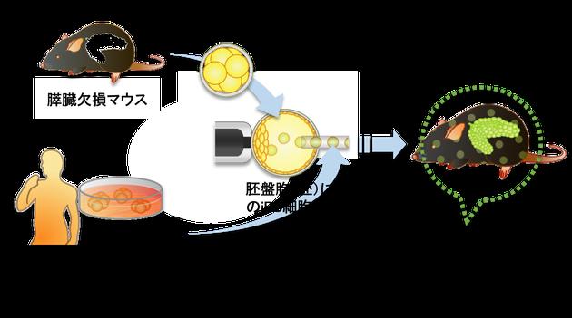 日本IDDMネットワーク提供