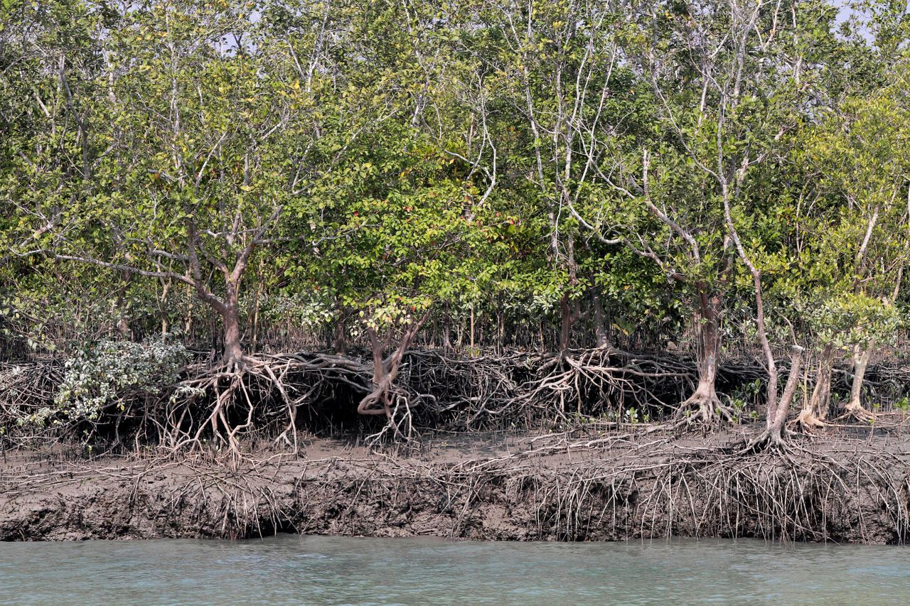 The freshwater swamps in the Sundarbans and their tangles of mangrove forests act as a crucial natural buffer against cyclones. The ecologically sensitive and overpopulated area is ground zero for climate change and a test for how the world will cope with warmer temperatures and rising seas.